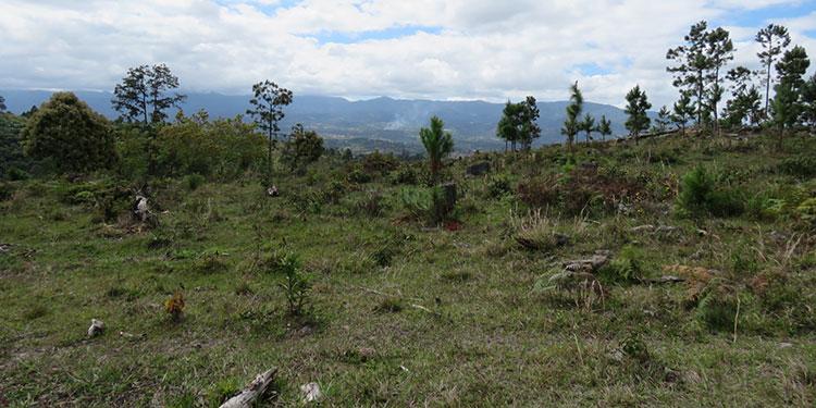 Hoy inician reforestación de microcuencas hidrográficas