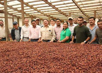 En los últimos años trasciende la cooperación a través del programa Procacaho, que promueve la producción de cacao orgánico en sistemas agroforestales.