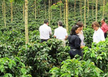$900 millones en divisas dejará exportación de café.