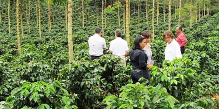 Recuperaremos un millón de quintales de café