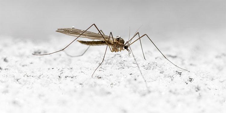 Pandemia aumenta riesgo de muerte por enfermedades trasmitidas por mosquitos, dice OPS