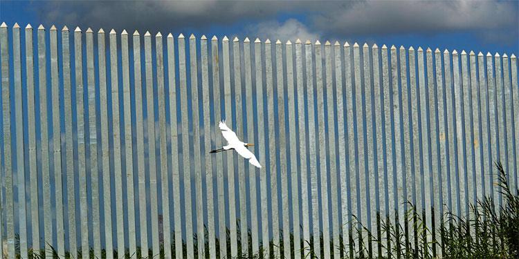 Contratista pro Trump gana nueva licitación de muro