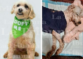 Indignación en Honduras por muerte de perro rescatado dado en adopción