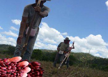 Los ciclos productivos de primera y postrera dejarán 16.8 millones de quintales en maíz, frijol, arroz y sorgo.
