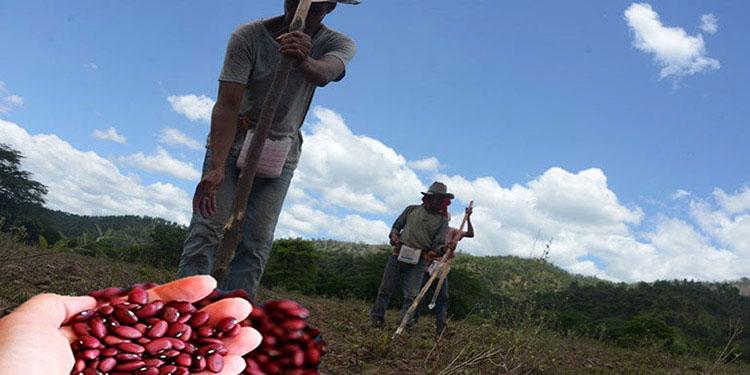 Entregan boletines agroclimáticos para cosecha de postrera