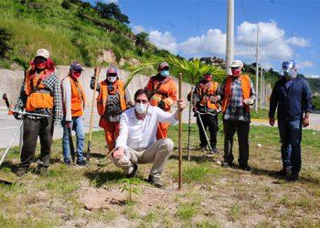 Las cuadrillas plantaron y cuidan 700 árboles en la vía rápida, que conecta hacia el sector de La Vega.