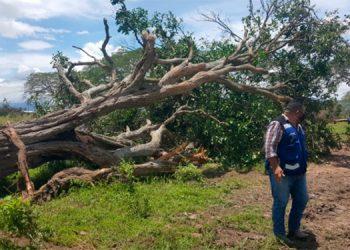 Frenan cruel deforestación en aldea La Música de Danlí