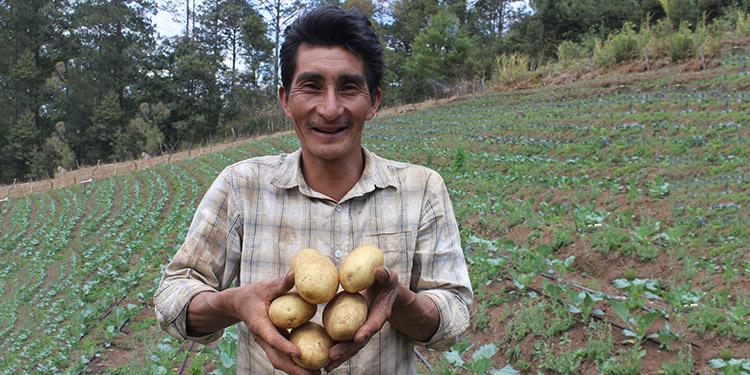 Sector agrícola presente en el 79% de las exportaciones