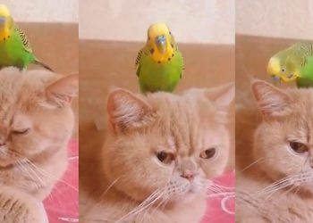La historia de un gato y el loro que se volvieron mejores amigos