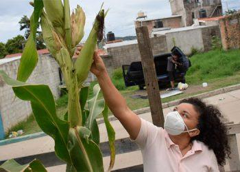 Lorena Flores (46), es originaria de Texiguat, El Paraíso, donde aprendió todo lo que sabe sobre agricultura.