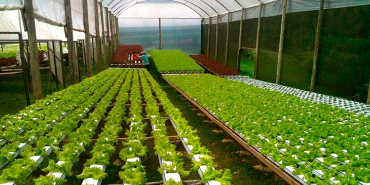 Los ''Agroparques'' mejorarán el nivel de vida de productores y de exportación con nuevos mercados.