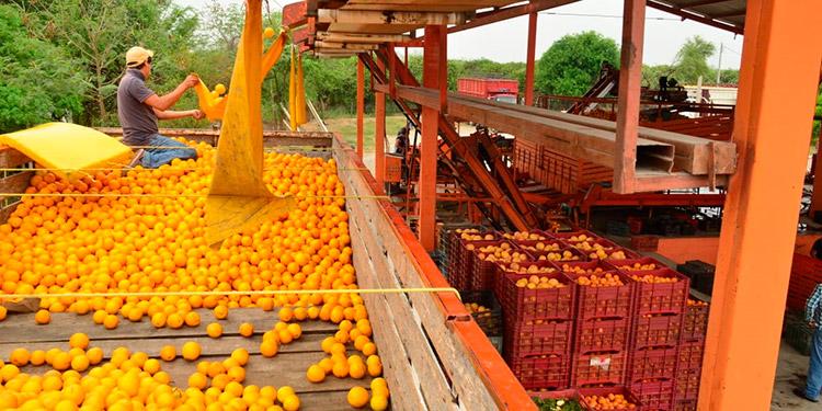Producción de naranja limón y mandarina fue buena: Agroexportadores