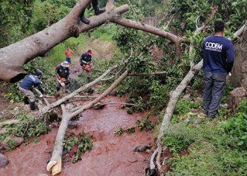 Personal de la alcaldía capitalina retiró los escombros de árboles que cedieron ante las lluvias y obstaculizaban el tráfico vehicular.