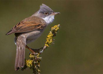 Las autoridades holandesas han encontrado anticuerpos en varias aves no migratorias que estaban en territorio holandés.