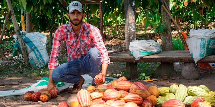 1300 toneladas se cacao se producirán al final de año