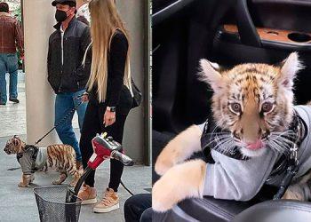 Mujer pasea cachorro de tigre y enciende las redes sociales (Video)