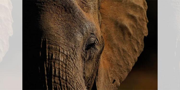 ¿Qué mató a más de 300 elefantes en Botswana?