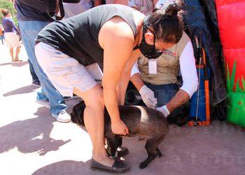 Con vacunación de mascotas, Honduras celebra 'Día Mundial de lucha contra la rabia'