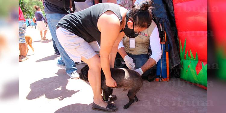 Con vacunación de mascotas Honduras celebra 'Día Mundial de lucha contra la rabia'
