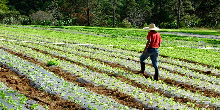 Durante los últimos años, el INA ha otorgado más de 30,000 títulos a agricultores y grupos de campesinos.