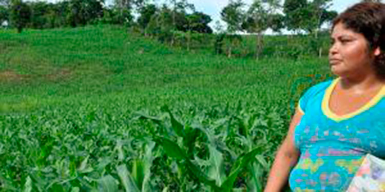 La FAO, propone disminuir la brecha de género en AL y el Caribe