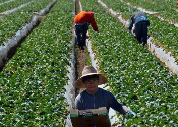 Los resultados positivos están vinculados a la recuperación económica de los Estados Unidos donde viven más de un millón de hondureños.