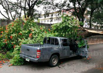 Fiscal y acompañante escapan de morir tras caer sobre carro un árbol