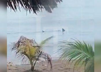 Captan a un tiburón merodeando las playas de La Ceiba