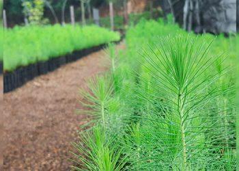 ICF conserva 12 millones de plantas en más de 130 viveros