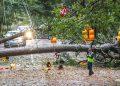 El sur de EEUU se recupera del paso del huracán Zeta