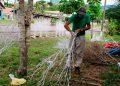 """La venta de las tradicionales """"chiriviscas"""" es una valiosa fuente de empleo temporal para muchas familias."""