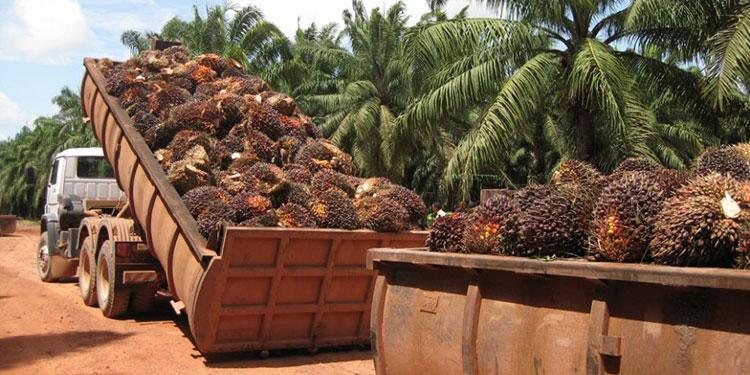 Los cultivos mayormente impactados son el café, el banano, palma africana y granos básicos, entre otros.