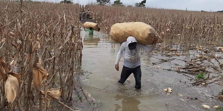 Gobierno, productores y agroindustriales diseñaron la estrategia para reactivar las unidades productivas que registran millonarias pérdidas tras el paso de Eta.