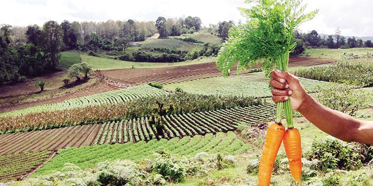 Ocho empresas conforman el Consorcio Agrocomercial.