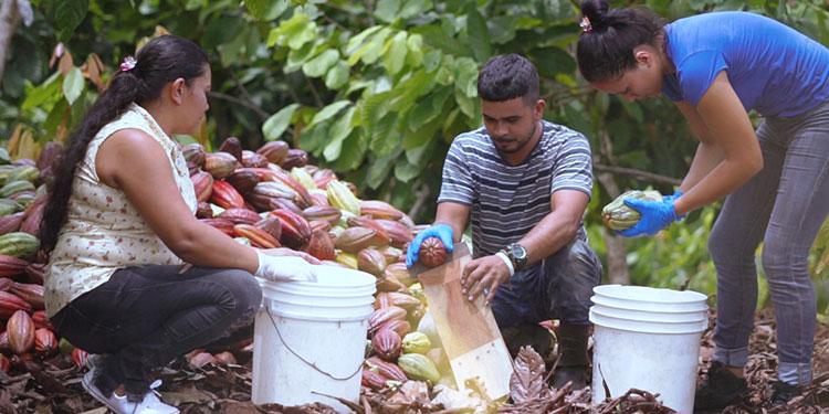 Honduras se prepara para el evento mundial de cacao de calidad y sabores excepcionales