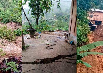 Al menos mil hectareas sembradas de cacao se perdieron tras el paso de huracanes