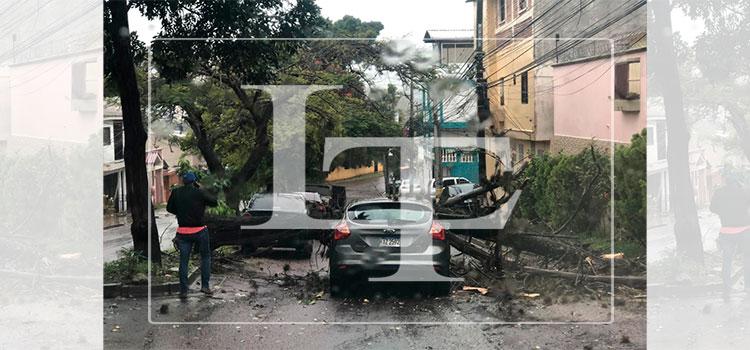 Hombre se salva de morir dentro de su vehículo tras caerle árbol en la colonia Miraflores