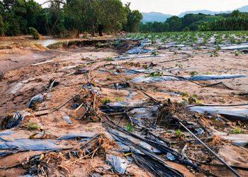 Exsecretario del Cococh: Todos los cultivos han sido afectados por las fuertes lluvias