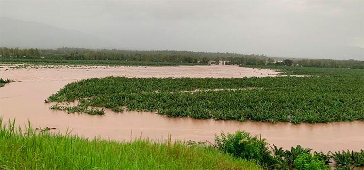 Eta destruyó 12 mil 580 manzanas de granos básicos en el sector productivo