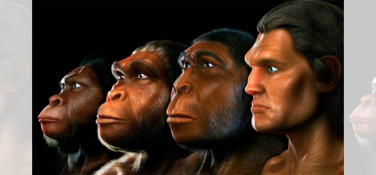 Un fósil muestra cambios evolutivos en una especie humana extinta