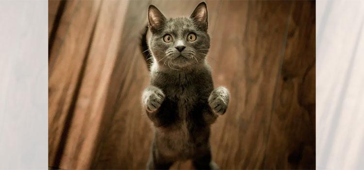 """Gato desaparece 3 días de casa y vuelve a casa con una enorme """"deuda"""""""
