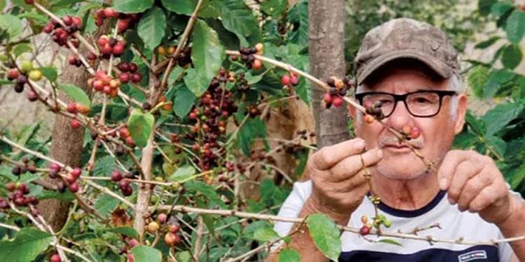 $1,000 millones en divisas generará exportación de café