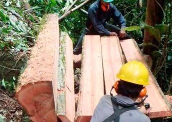 Promueven un proyecto para legalizar el comercio forestal