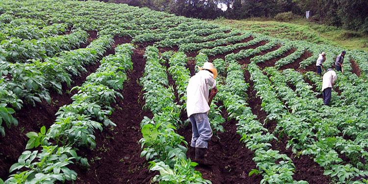 Campesinos proponen crear gabinete agrícola
