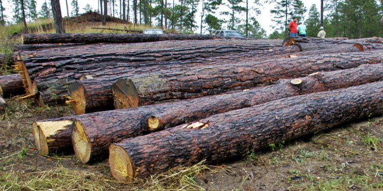 Organizaciones promueven proyecto para legalizar el comercio forestal en el país