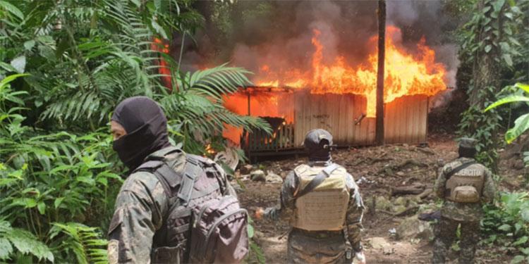 Nueve laboratorios destruidos y plantíos de coca asegurados