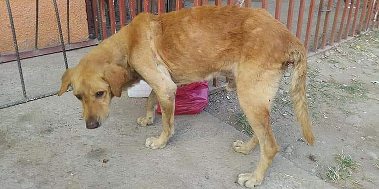 El can presenta lesiones producto del abuso que sufrió por parte de un hombre con trastorno mental.