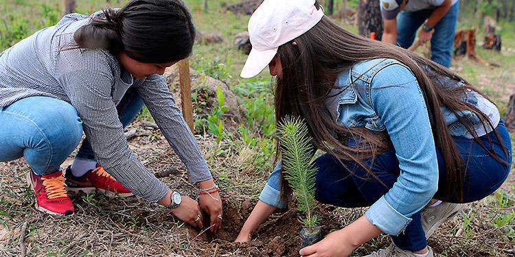 Unos $70 millones serán invertidos en proyectos de reforestación