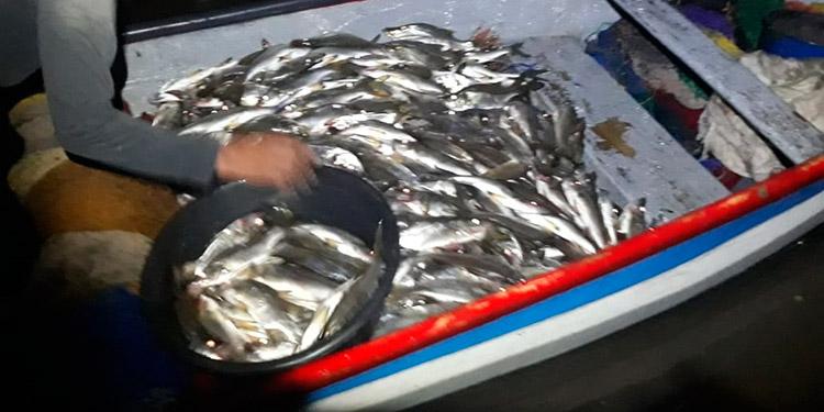 La milagrosa pesca tuvo que ser sacada en carro pick up.