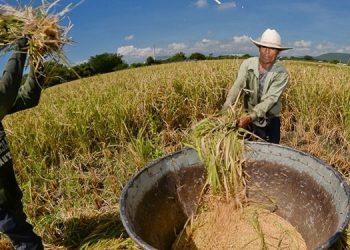 Torres aseguró que la importación del grano no afecta a los productores nacionales.